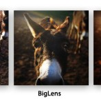 iPhone Fotos mit Tiefenschärfe: BigLens Foto-App